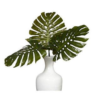 split-philodendron-leaf-200196563